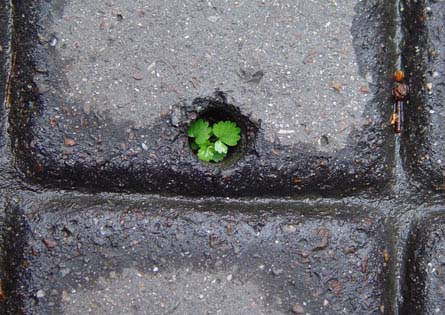 Dalle beton-gazon_Lucile Soufflet_3
